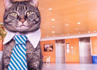 Cat teaching English online